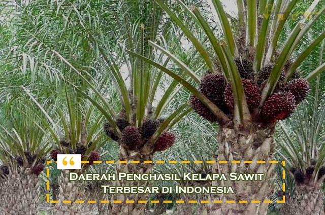 Daerah Penghasil Kelapa Sawit Terbesar di Indonesia